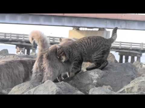 Des chats sauvages se font des grosses caresses
