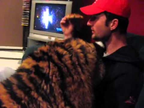 Jonas, le bébé tigre fait comme chez lui à la maison