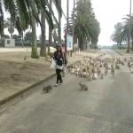 Une floppée de lapins courre après une fille !
