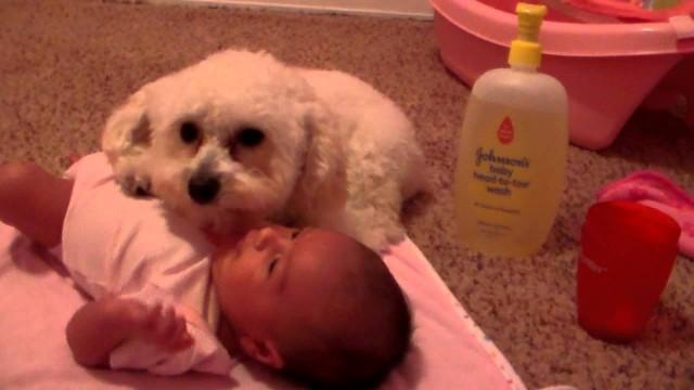 Un chien protège un bébé avec son corps
