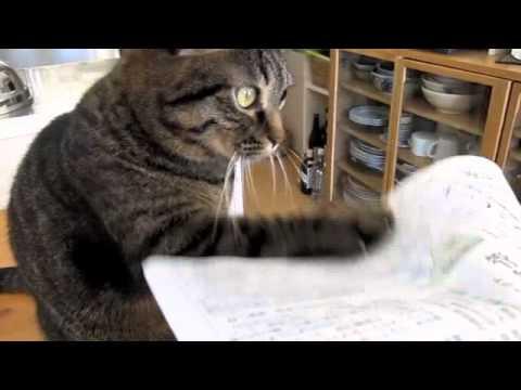 Un chat tape obsessivement contre un journal