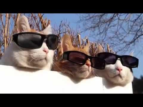 Des chats prennent le soleil. Normal ?