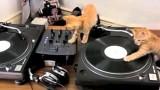 Des Chatons Qui Mixent ? Miaow Beats Vol. 1