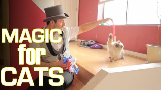 Est-ce Que les Chats Aiment les Tours de Magie ? Réponse…