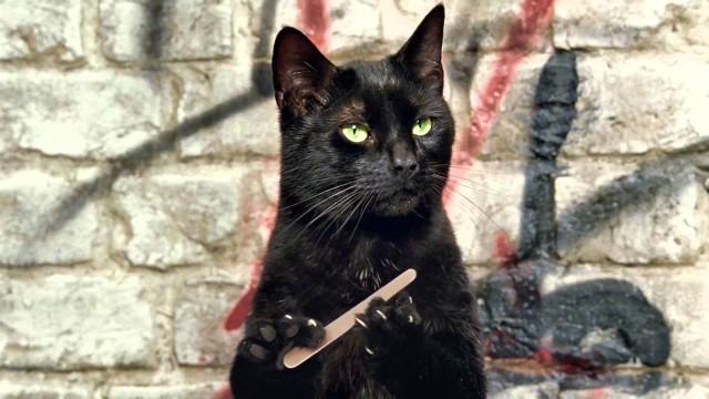 Cravendale : comment serait le monde si les chats avaient des pouces