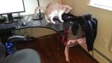 Comment Empêcher un Chat de Monter sur un Bureau ?