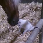 Un Chat Fait des Câlins à un Cheval