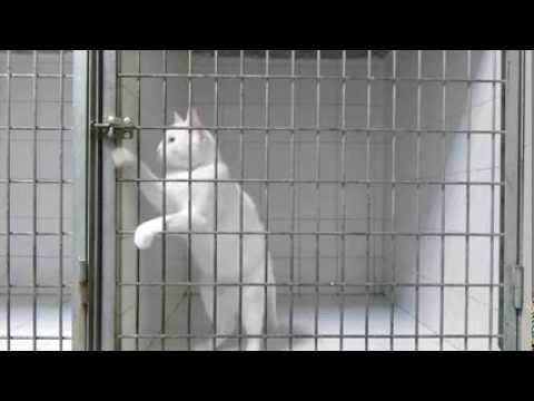 Regardez Comment ce Chat s'enfuit d'une Boîte Fermée à Clé