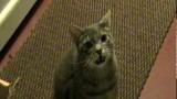 Le Chat qui fait Hey !