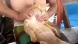 Un Chat se paye un Massage de folie