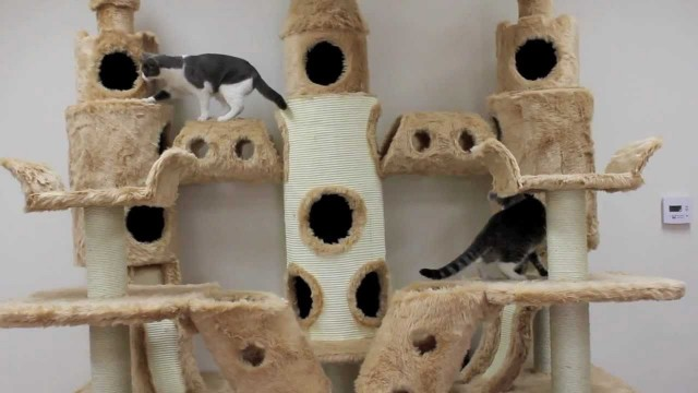 Un arbre à chat de folie !