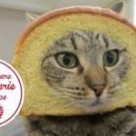 Un Chat se Prend une Porte dans «La meilleure boulangerie de France»