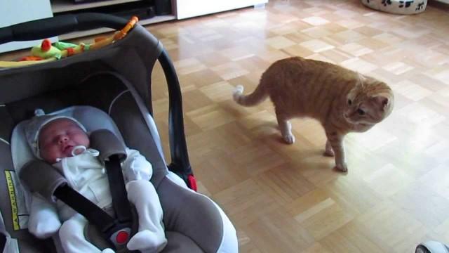 Un Chat rencontre pour la Première Fois un Bébé !