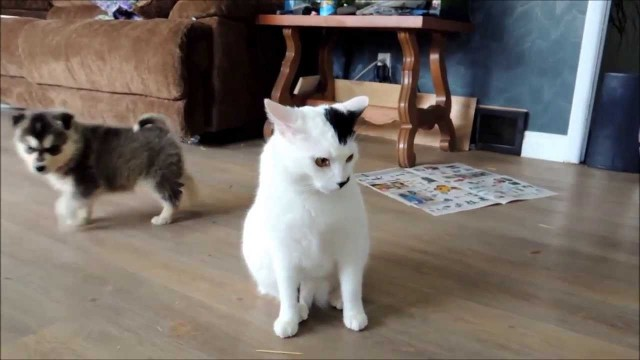 Un Chat très très très Patient