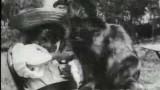 La Première Vidéo de Chat de l'Histoire !