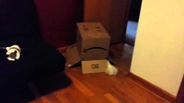 Un Chat fait un gros Fail avec une Boîte