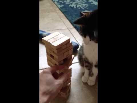 Un Chat joue au Jenga !