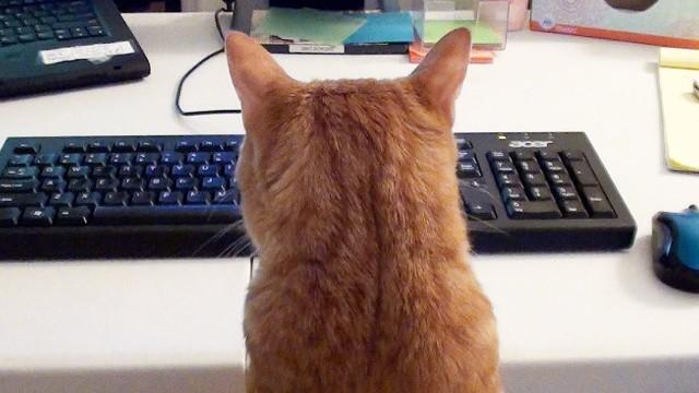 Travailler avec un Chat….