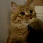 Un Chat Aspire un… Aspirateur…