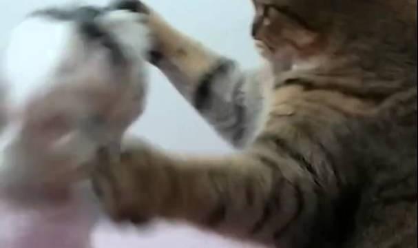 Un Combat de Chien et de Chat ! (marrant)