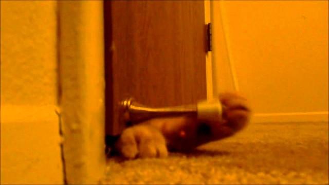 Que fait un Chat lorsqu'il s'ennuie de son Maître ?