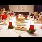 Freshpet : Des Chiens et des Chats Réveillonnent (et c'est drôle)