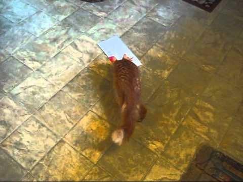 Un Chat attaque une Carte de Vœux de … Chat