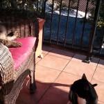 Les Chats sont vraiment Méchants !