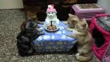 Un Chat fête son Anniversaire avec Style