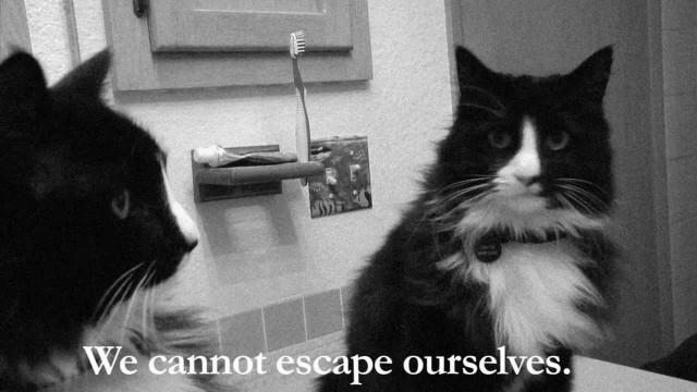 La Dépression du Chat
